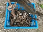 Heavy Duty Chains Lot