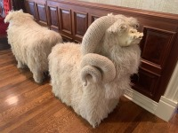 Flocati Wool Chairs by Edna Cataldo C 1970  Sheep and Ram - 2